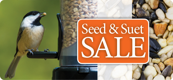 Summer Seed & Suet Sale